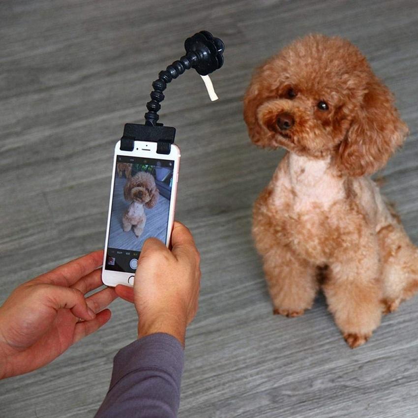best pet selfie